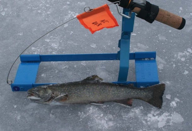 Arctic warrior and brook trout